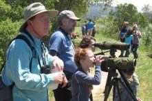 Arcata Marsh & Wildlife Birdwalk (FOAM)