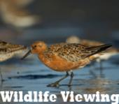 Wildlife Viewing Delaware Outdoor Trail