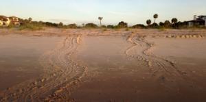 Loggerhead tracks