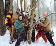 Tapping the maple tree