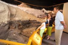 Museum of Arts & Sciences Daytona Beach Bone Bed Replica