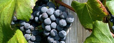 farmers-grapes