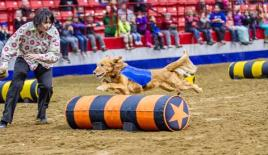 Super Dogs at the Royal Manitoba Winter Fair in Brandon