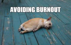 Avoiding Burnout-Tired Dog