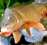 RIVER CARP – Mike McGrath of Central New York Carp Angling Service will share his tips on catching carp in local rivers at a seminar at the Brewerton Library Saturday, April 21. (Photo courtesy Central New York Carp Angling Service.)