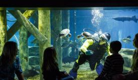 Trivago_Tennessee Aquarium