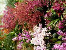 ny-botanical-garden-orchid-show.JPG