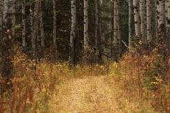 October in Riding Mountain National Park