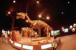 Delaware Museum of Natural History - Dino