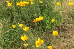 Dexter Lake Wildflowers