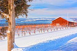 Farm at winter