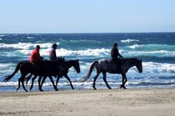 Horseback Riding, Florence by Jeff Green