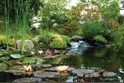 Highline SeaTac Botanical Garden Flowers and Stream