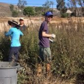 Collect Wildflower Seeds at the Native Seed Farm