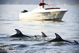 Sea Quest Scavenger Hunt