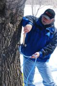 Tapping maple trees at Manitoba Maple Syrup Festival in McCreary