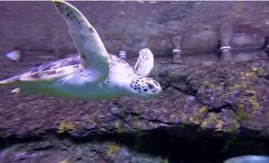Sea Turtle at NC Aquarium at Fort Fisher