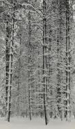 Ansel Adams, American (1902-1984), Trees and Snow, 1933, vintage silver gelatin print, framed: 20 x 16 inches