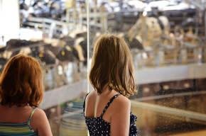 Fair-Oaks-Farms-Dairy-Adventure