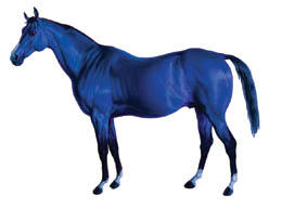 Big Lex Blue Horse