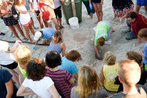 volunteers excavating a sea turtle next