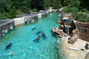 Fort Wayne Children's Zoo - Sea Lion Beach (2)