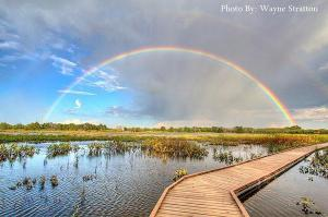Wayne Stratton rainbow