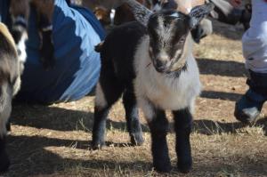 Georges Mill Farm - Loudoun County, VA