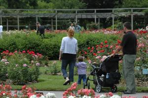 The Columbus Park of Roses in Clintonville