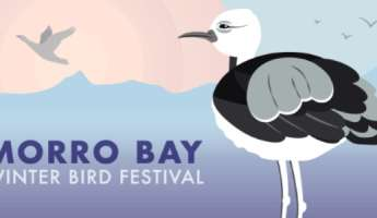 Morro Bay Winter Bird Festival
