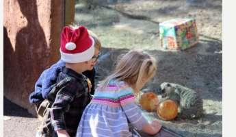 Holiday Magic at the Charles Paddock Zoo