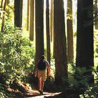 Tall Tree Hiker by Traci Williamson