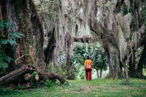 Oak Tree, Flamingo Gardens