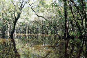 The Everglades -- River of Grass