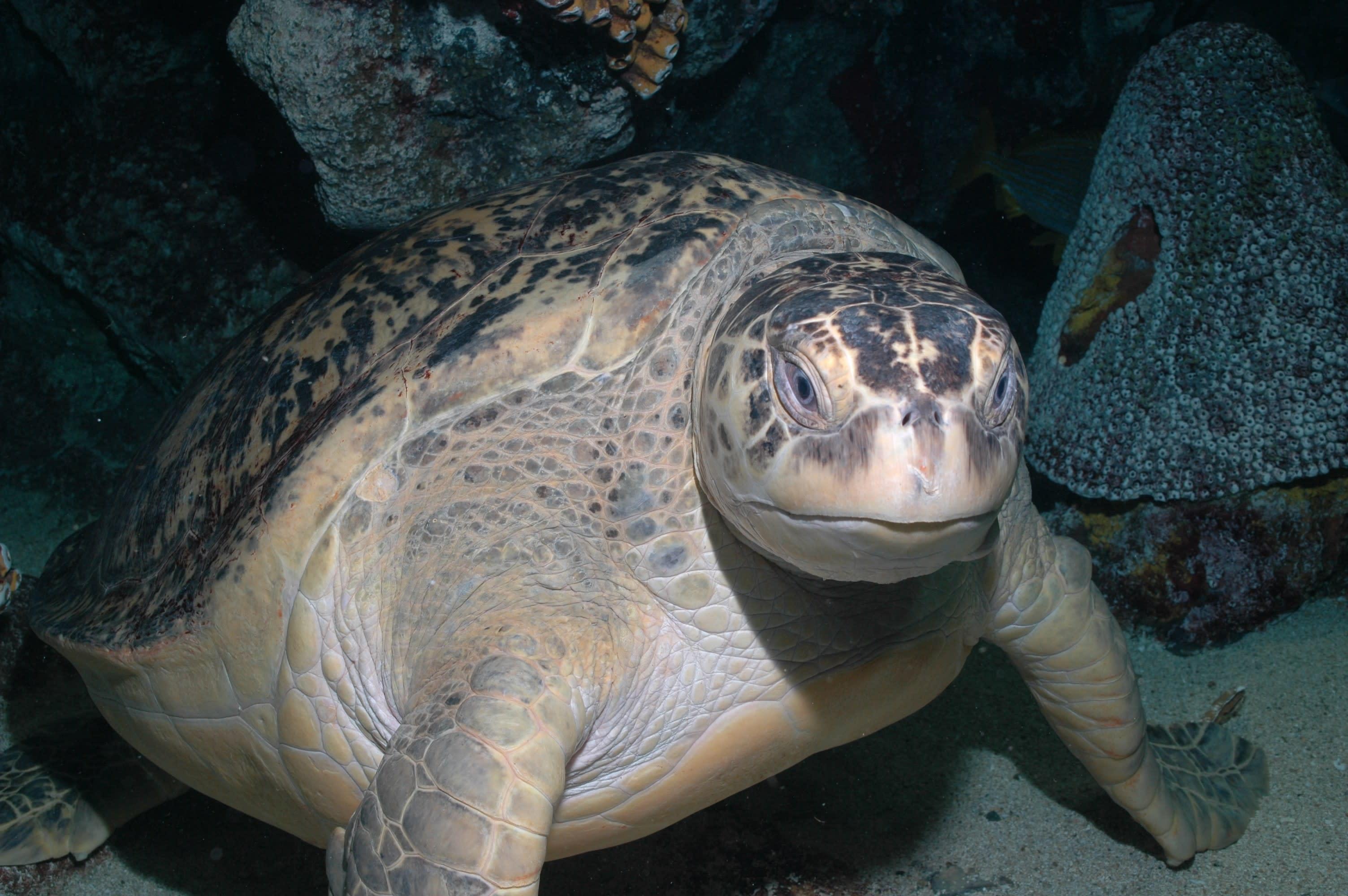 new england aquarium turtle