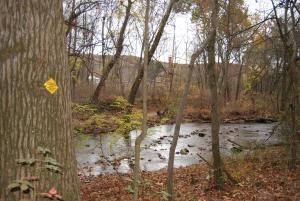 Mount Holly Marsh Preserve-12
