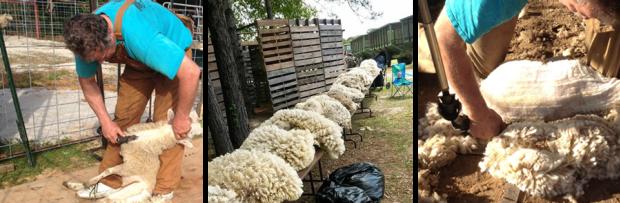 Wool Days @ CM Farms