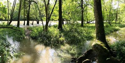 Amberleigh Park Water Access