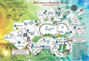 Butterfly World Map