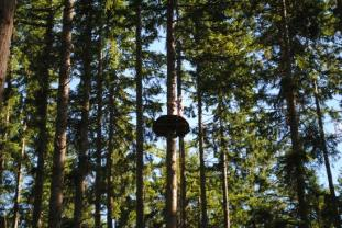 5 Places to Zip Line near the Greater Seattle Area and Puget Sound Northwest Trek Wildlife Park