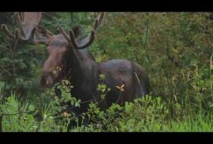 Frontiers North's Big Five Safari