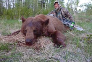 Cinnamon Color Phase Bear