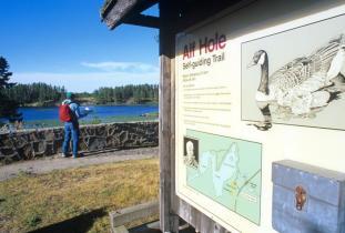 Alfred Hole Goose Santuary