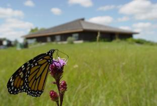 Interpretive centre with monarch butterfly on meadow blazing star.