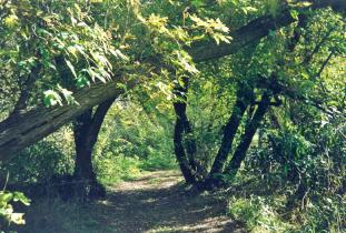 Canupawakpa Trail