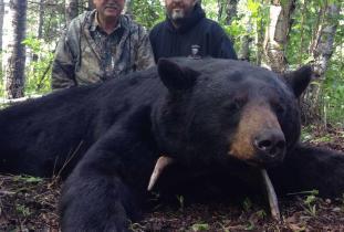 Agassiz Outfitter, black bear hunting