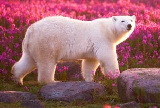 Gangler's Polar Bear Tours