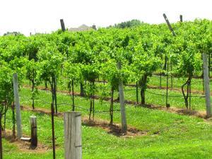 Rowe Ridge vineyard - Mature Traveler blog