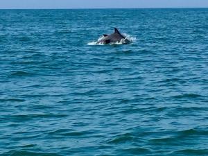 dolphin watch cruise in Myrtle Beach