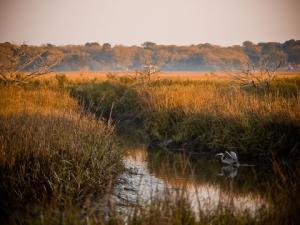 Marsh wildlife